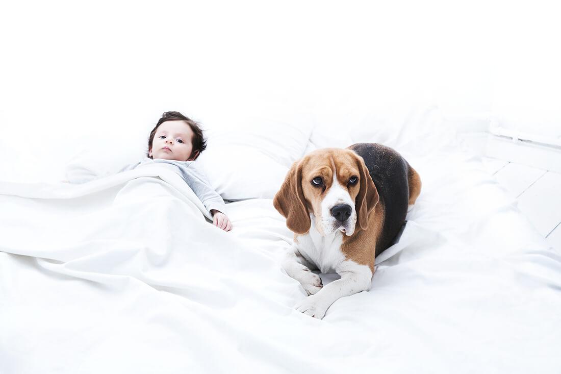 Babyportrait mit Hund © Miriam Ellerbrake, Little Monkey Berlin 2018